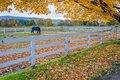 Berkshires, Equestrian Center, horse, New England, foliage