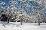 NE Winter & Snow