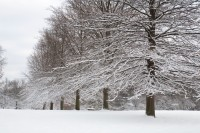 New England, Massachusetts, Trees, Snow, Danvers