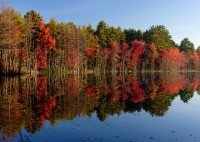 Foliage, Reflection, Massachusetts, New England, Fall