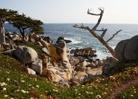 Ghost Cypress Tree