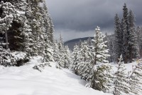 High In Colorado