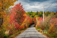Fall foliage, Maine, Samoset