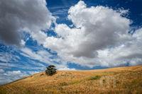 California, clouds, sky, yellow, tree, lone tree