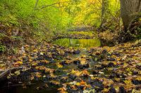Foliage, River, New England, Stream