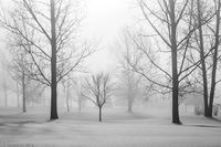 Snow, light, fog, black and white, new england