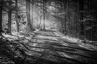Snow, shadows, light, New England, Black & White, fog