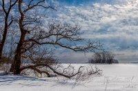 Tree Beside Rowley Marsh