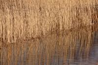 Salisbury, Massachusetts, Reeds, Nature