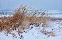 Snowstorm, snow, storm, winter, beach, New England, Nature, reeds
