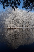 Snow, reflection, trees, pond, winter, New England, Nature