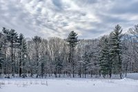 Snow,Willowdale State Forest, New England