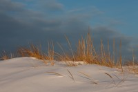 Good Harbor Beach, Gloucester,Winter, Dune