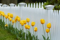 Cape Cod, fence, tulips, flowers, yellow, New England Photo Workshops