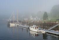 Rocport Harbor In Fog