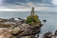 Lubec - ME, Maine, New England, Tree, coast, New England Photo Workshops