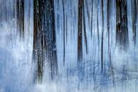 winter, snow, trees, new england, fine art, blue, storm