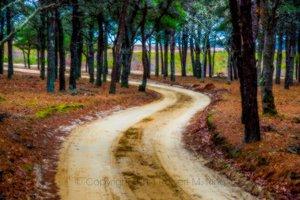 Dream Road On Chappy