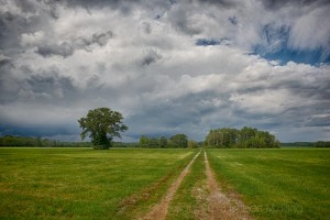 Road To Lone Tree