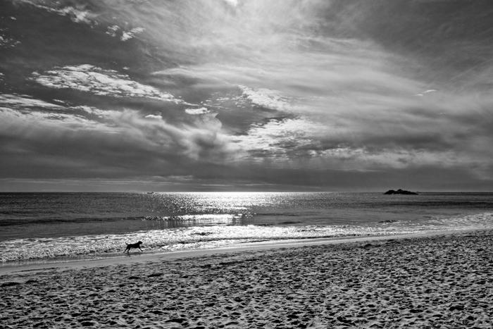 Black, Dog, Beach, Sunrise, Black & White, Ocean, New England, photo