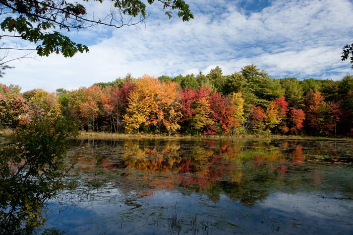 Small pond,Boxford, MA, foliage, Fall, Massachusetts, New England, pond, photo