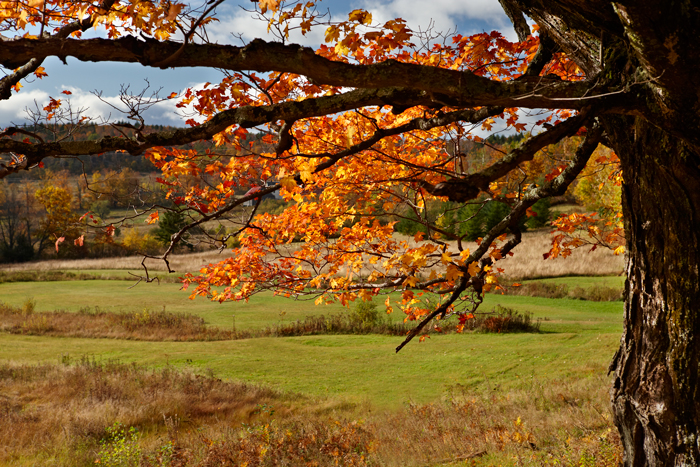 Vermont, Foliage, Fall, New England, photo