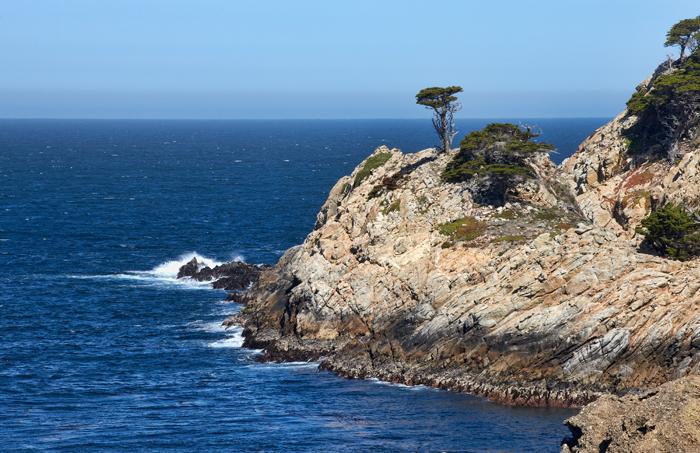 Cypress, Cypress Tree, Monterey, California, West Of New England, photo