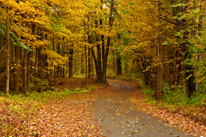 Foliage,October, dirt road, Georgetown, MA, trees, Fall, New England, Massachusetts, photo