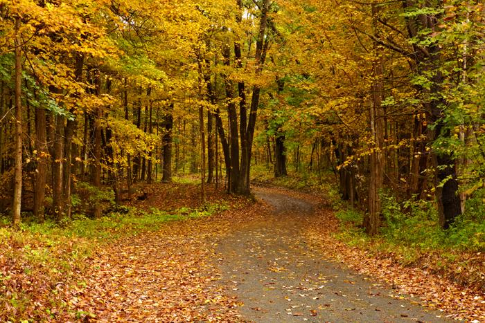 Foliage,October, dirt road, Georgetown, MA, trees, Fall, New England, Massachusetts, photo