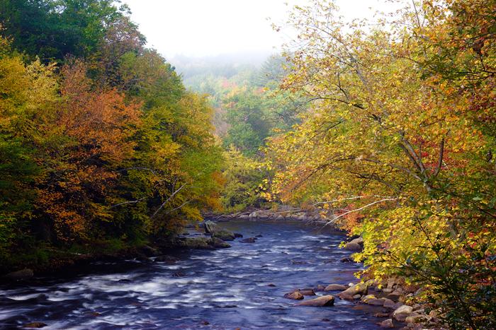 Foliage, Nature, Fall, New England, Massachusetts, river, photo