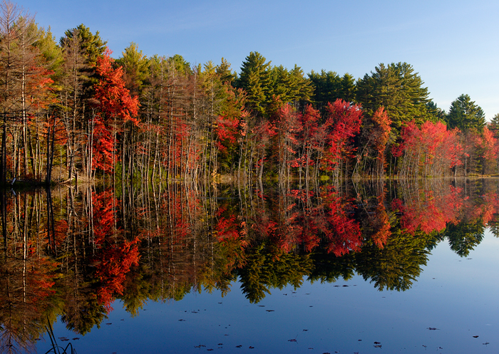 Foliage, Reflection, Massachusetts, New England, Fall, photo