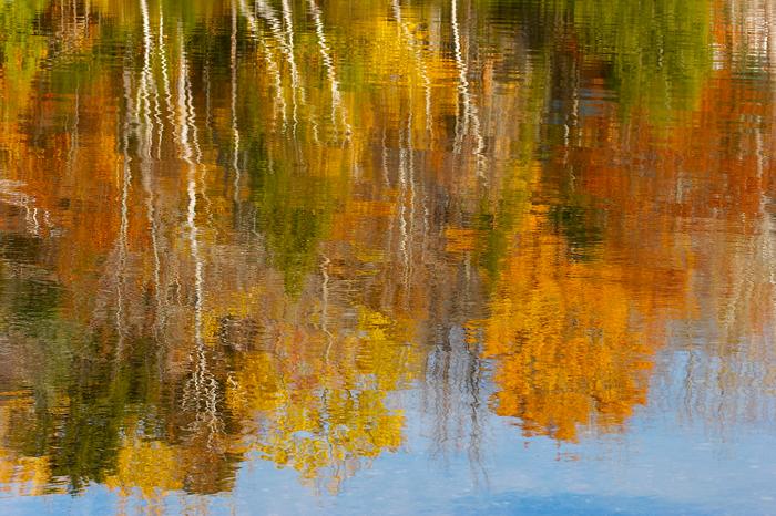 Foliage, Fall, water, reflection, Nature, photo