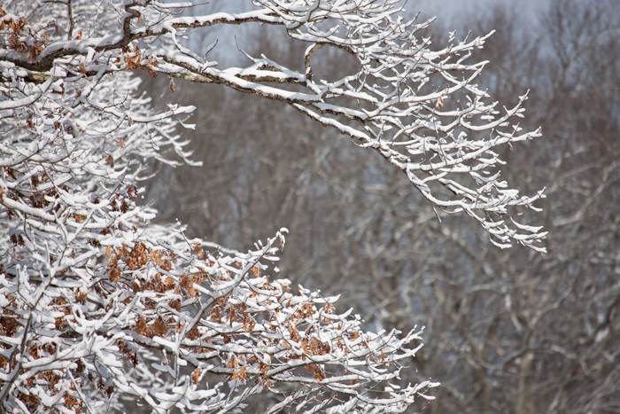 Snow, tree, branch,nature, photo