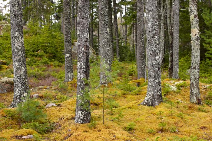 Trees, Acadia, quiet, garden, photo