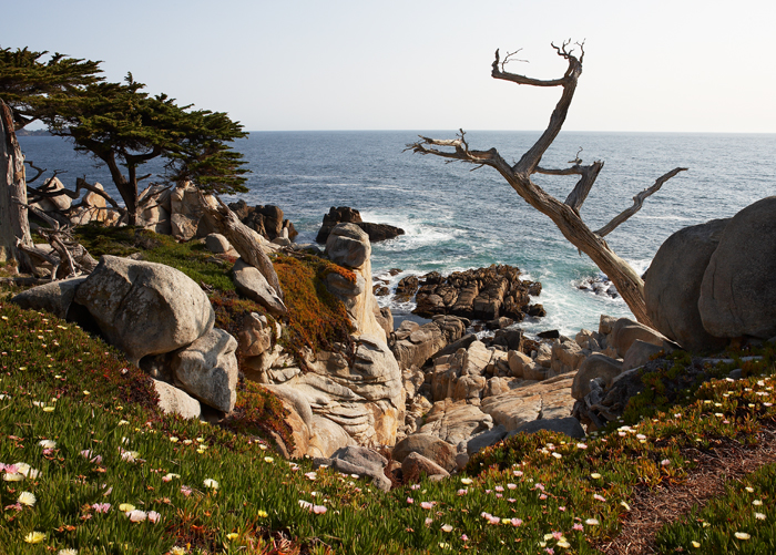 Ghost Cypress Tree, Cypress Tree, Monterey, California, West Of New England, photo