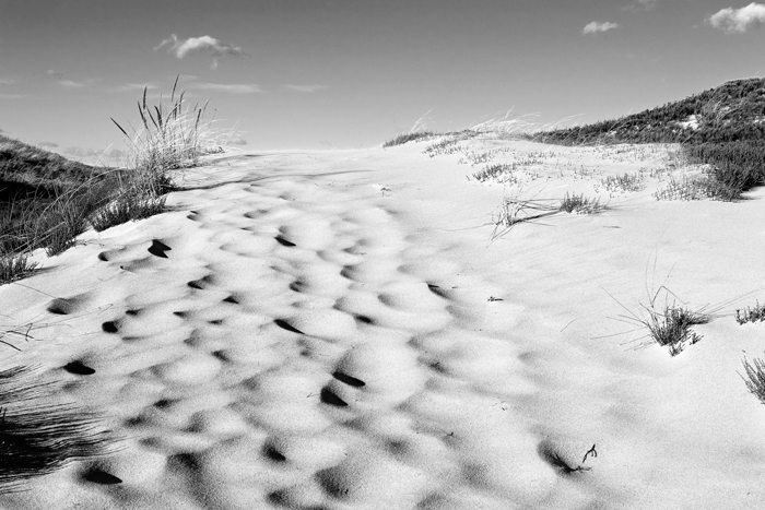 Green Trail, Cranes Beach, Ipswich, Massachusetts, Sand, Beach, Black & White, Nature, New England, photo