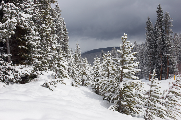 Colorado, Winter, Snow, Trees, West of New England, snowshoeing, photo