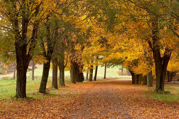 Ingaldsby, Apple Farm, Farm, Foliage, Fall, New England, Boxford, Massachusetts, photo
