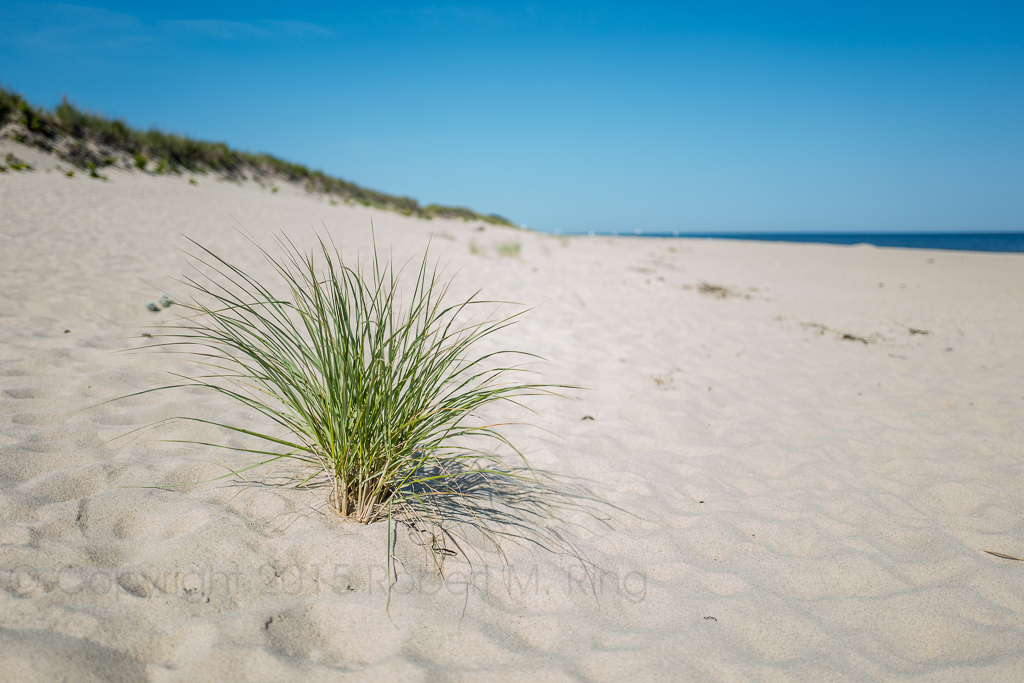 Head Of The Meadow Beach is a great location found along the Cape Cod National Seashore. In the 'off-season' it can be...