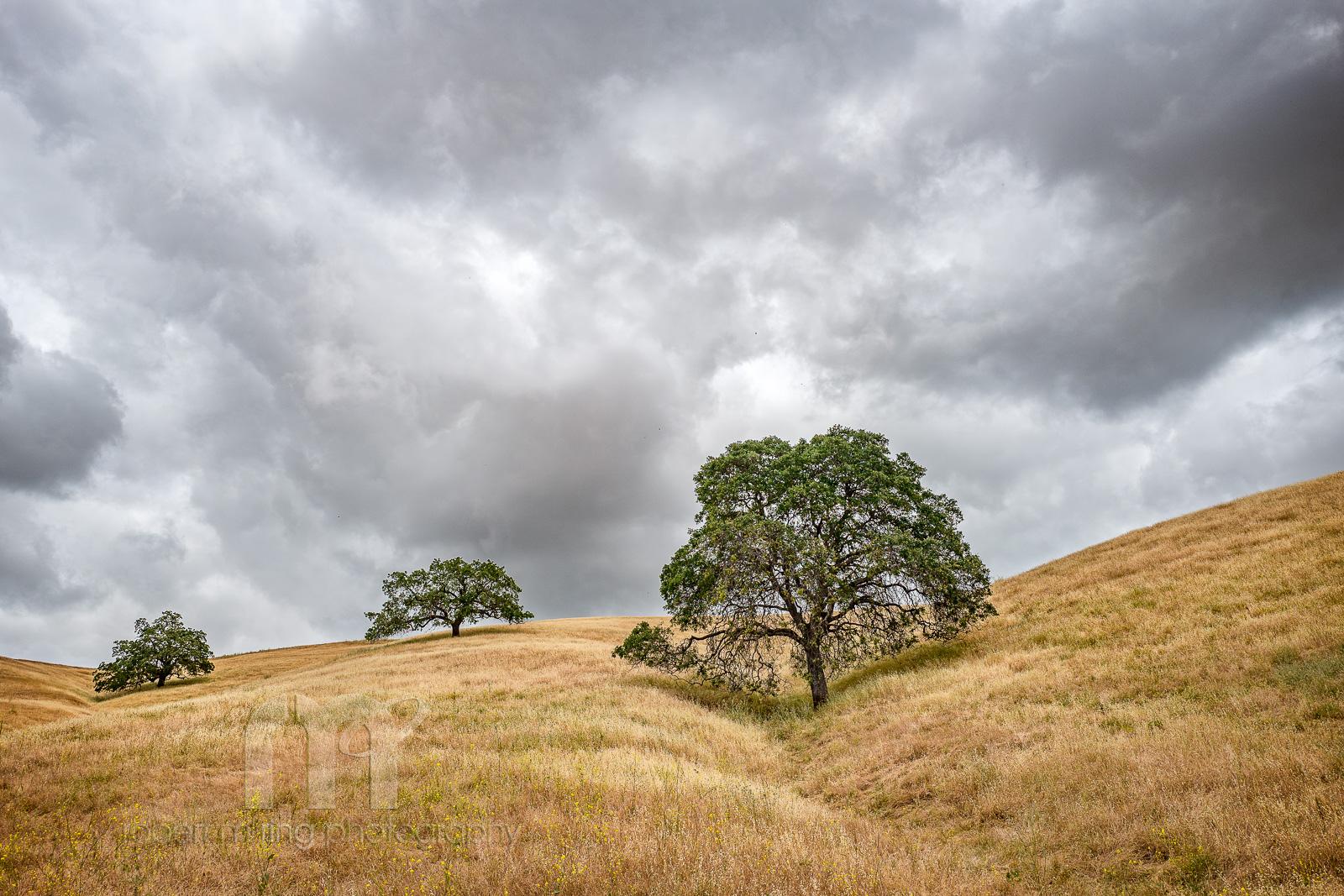 California, photo