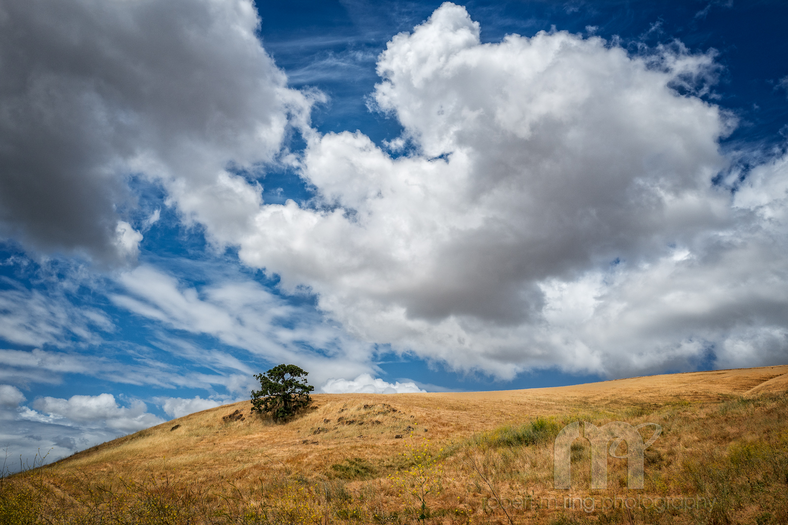 Lone tree on a hillside inside the state park with unbelievable clouds rolling by!