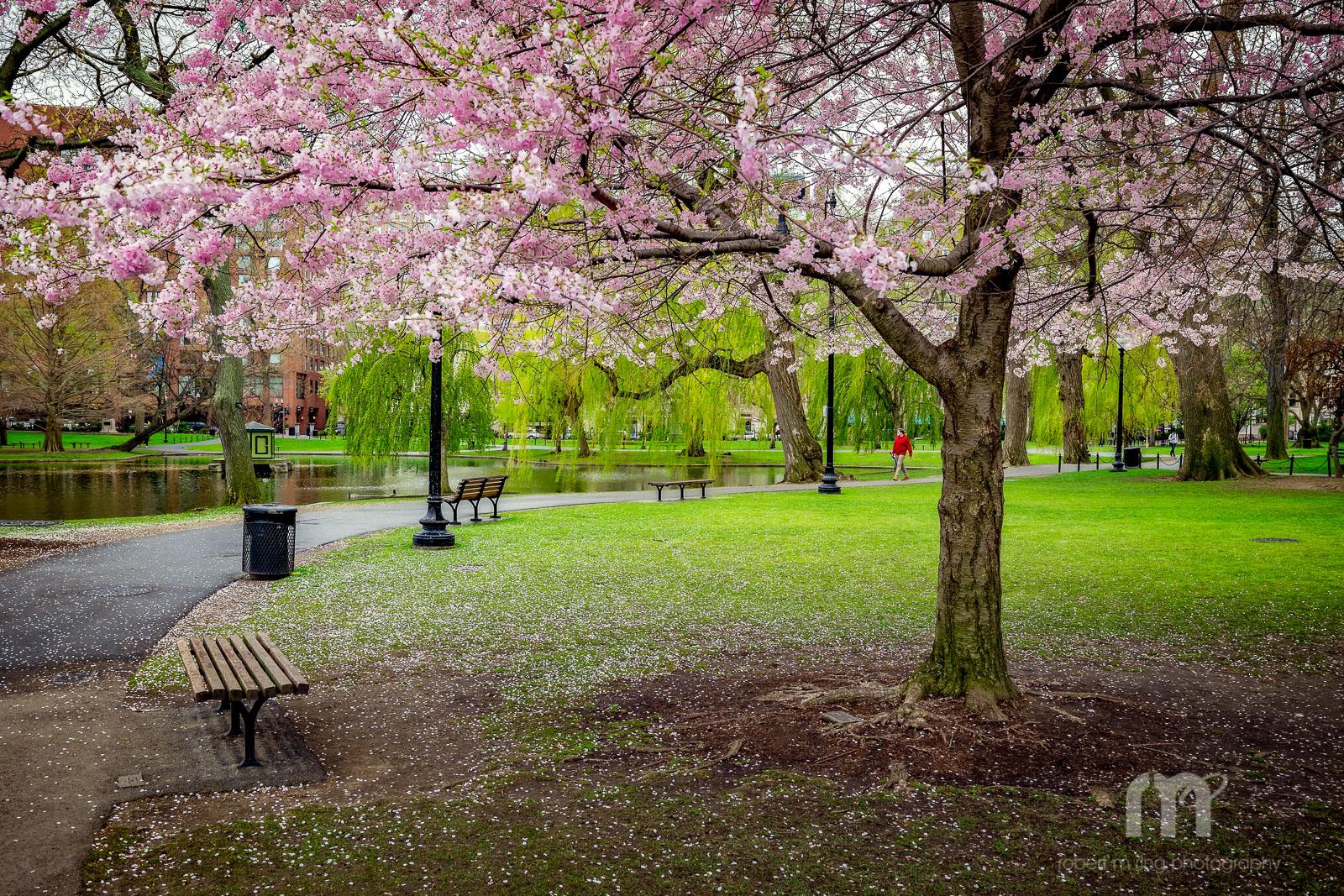 Boston, Boston Common, photo