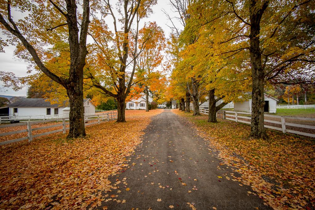Berkshires, photo