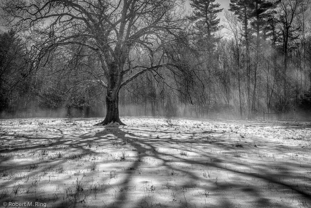 Snow, light, rays,sun, shadows, new england, black & white, photo
