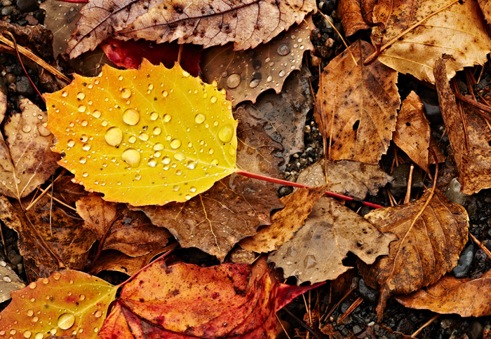 Leaves, Shore, Foliage, Fall, Nature, leaf, photo