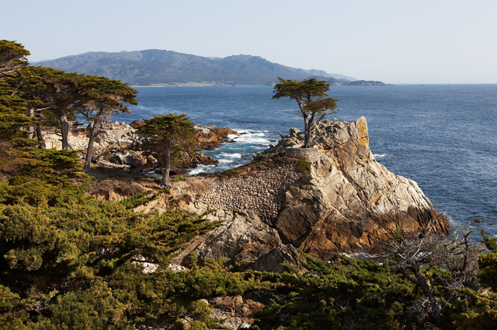 Cypress Tree, Cypress, Pebble Beach, California, Ocean, West, West of New England, photo