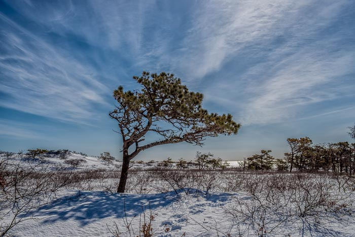 Interesting how the clouds kind of formed an arch around this lone tree in the Marconi Beach area in the Cape Cod National Seashore...