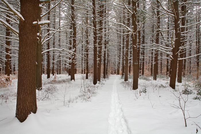 Maudslay State Park, Maudslay, State, Park, Massachusetts, Newburyport, Trees, Snow, Nature, Forest, photo