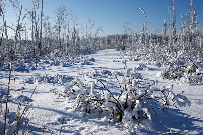 Snow, Marsh, Winter, Nature, Massachusetts, photo