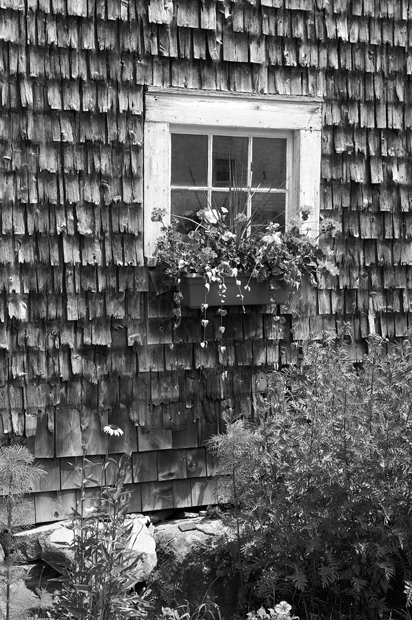 Lincolnville, Maine, Old window, Black & White, New England, barn, old barn, flowers, photo